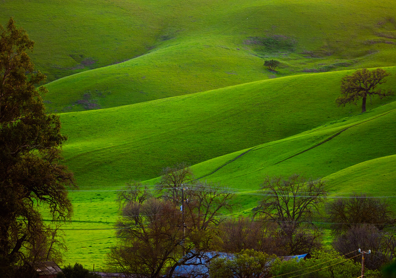 East Bay Hills After Winter Rains