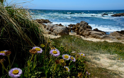 Beach at Asilomar, California