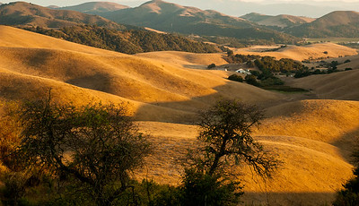 """Golden"" Hills in  Monterey Peninsula"