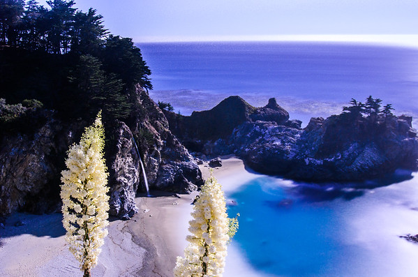 McWay Falls during Full Moon with Spring Bloom