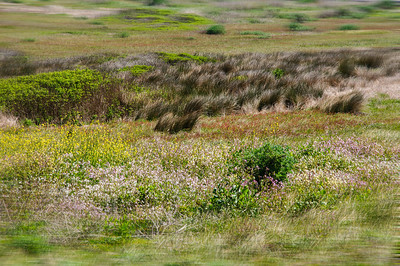 I tried to get some close-up shots of the wildflowers but with the wind blowing a pretty steady 10-15 MPH, with gusts up in the 20-25 range, it was virtually impossible. So I went with full view shots of fields in motion.