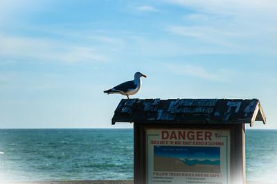 Day 3.6 Wright's Beach 425