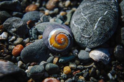 Day 3.4 Shell Beach 394