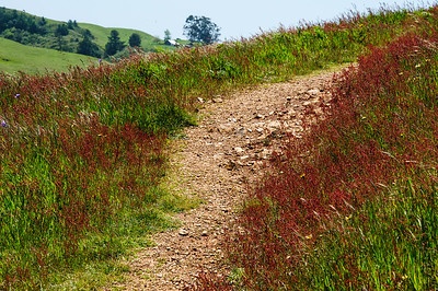 Day 5.2 Pomo Cnyn & Red Hill Trails 615