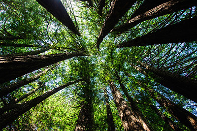 I finally found the trail and started out in the same dense redwood forest as the campground.