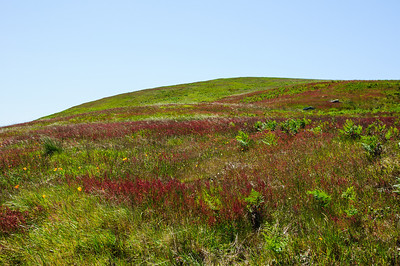 """I'm guessing this is why they call it """"Red Hill"""". I have no idea what this grass is called but it was very pretty."""
