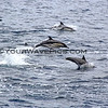 1165_2014-07-21_Channel Islands dolphins.JPG