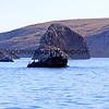 3344_Santa Cruz Island_1-2-14.JPG