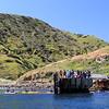 2019-04-17_Santa Cruz Is_Scorpion_Landing_86.JPG<br /> Scorpion Landing, Santa Cruz Island, Channel Islands