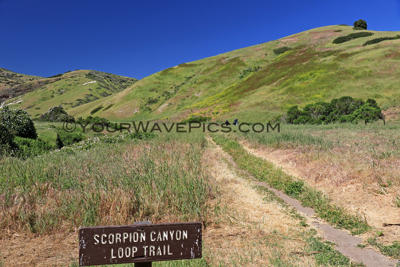 2019-04-17_Santa Cruz Is_Scorpion_38.JPG<br /> Scorpion Landing, Santa Cruz Island, Channel Islands