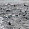 2019-06-23_691_Channel Islands_Dolphin Stampede.JPG
