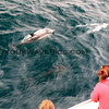 2019-06-23_689_Channel Islands_Dolphins.JPG