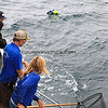 2019-06-23_681_Channel Islands_Island Adventure_Balloon Retrieval_Dave_Lisa.JPG<br /> <br /> The Captain spotted a mylar balloon floating so she stopped the boat and the crew retrieved it.  Island Packers really cares about our oceans!