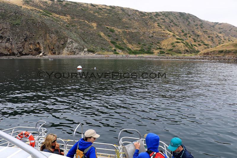 2019-06-23_598_Channel Islands_Santa Cruz Is_Scorpion.JPG