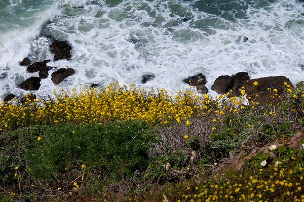 Pacifica surf and flowers Écume et fleurs de Pacifica
