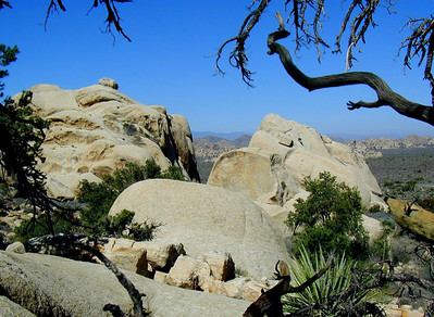 Scenic panorama of Joshua Tree National Park near Palm Springs, Southern California