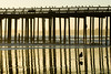 Birds line the rail on the pier.