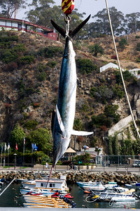 Catalina Catch