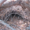 The Fallen Limbs and Leaves Have Formed Natural Brush Piles - Centennial Heritage Museum Nature Trail - Santa Ana, CA  2-16-07
