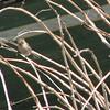 Unidentified Bird - Centennial Heritage Museum Garden - Santa Ana, CA  2-16-07