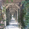 Lovely Walkway Covered with Jasmine - Centennial Heritage Museum Garden - Santa Ana, CA  2-16-07