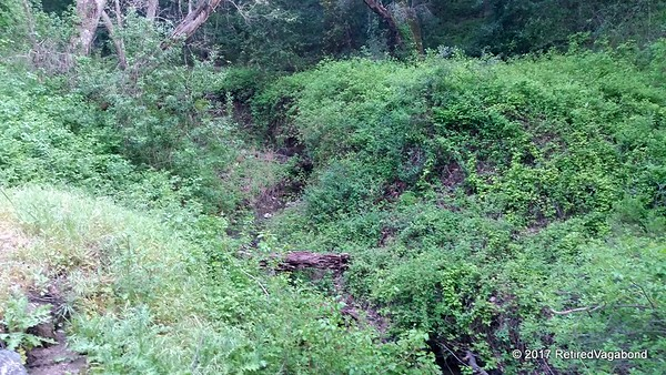 Poison Oak everywhere