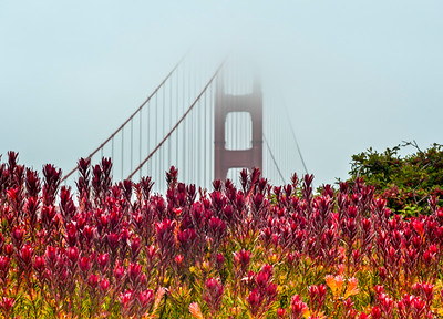 Golden Gate Bridge (8)