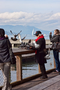 "Walking around Pier 39, I spotted this lady feeding the birds.   ""Bird Lady of Pier 39"""