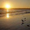 The sun settings over the pacific with seagulls on the beach on Coronado Island.