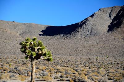 Joshua Tree - Death Valley National Park - California - USA