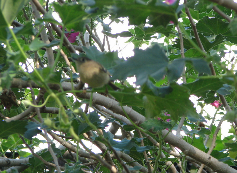 Unidentified Bird at Environmental Nature Center - Newport Beach, CA
