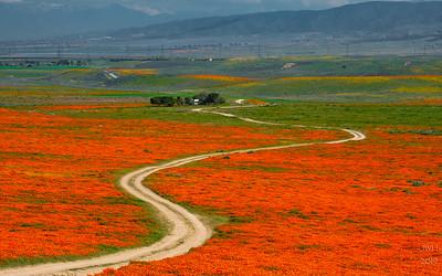 Winding path 2
