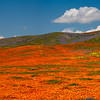 Fields of .... Orange!
