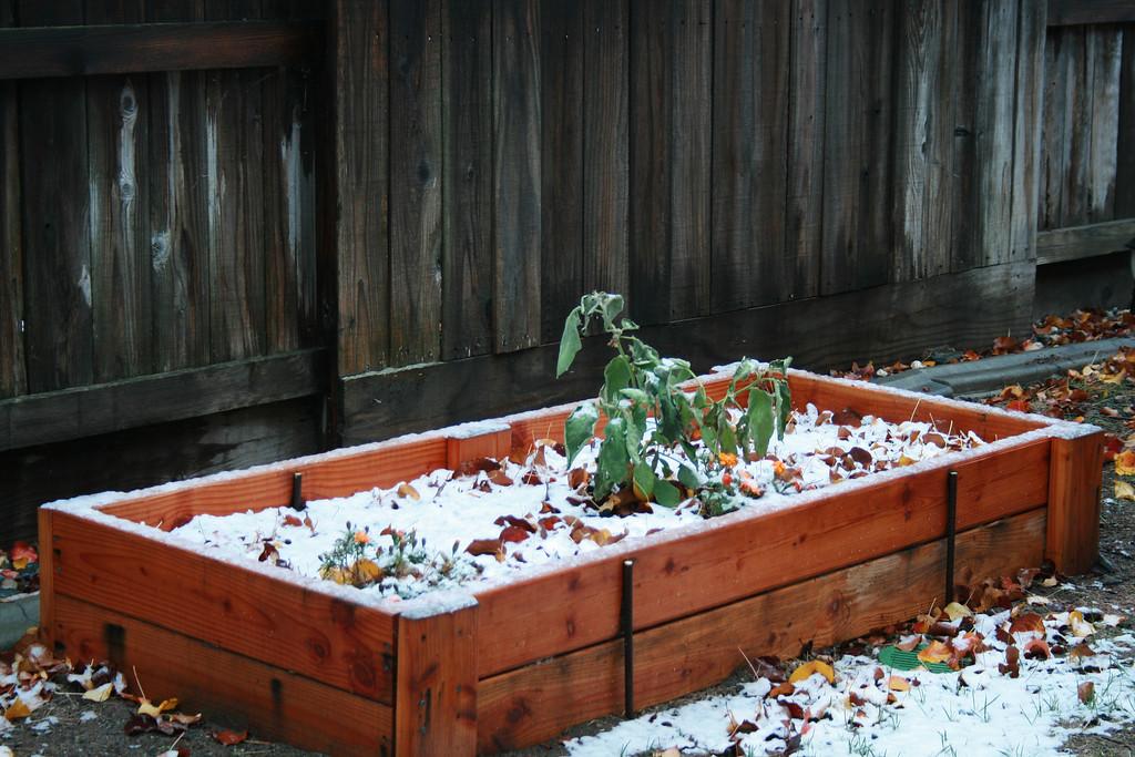 Folsom, CA, December 7, 2009.  Image Copyright 2009 by DJB.  All Rights Reserved.