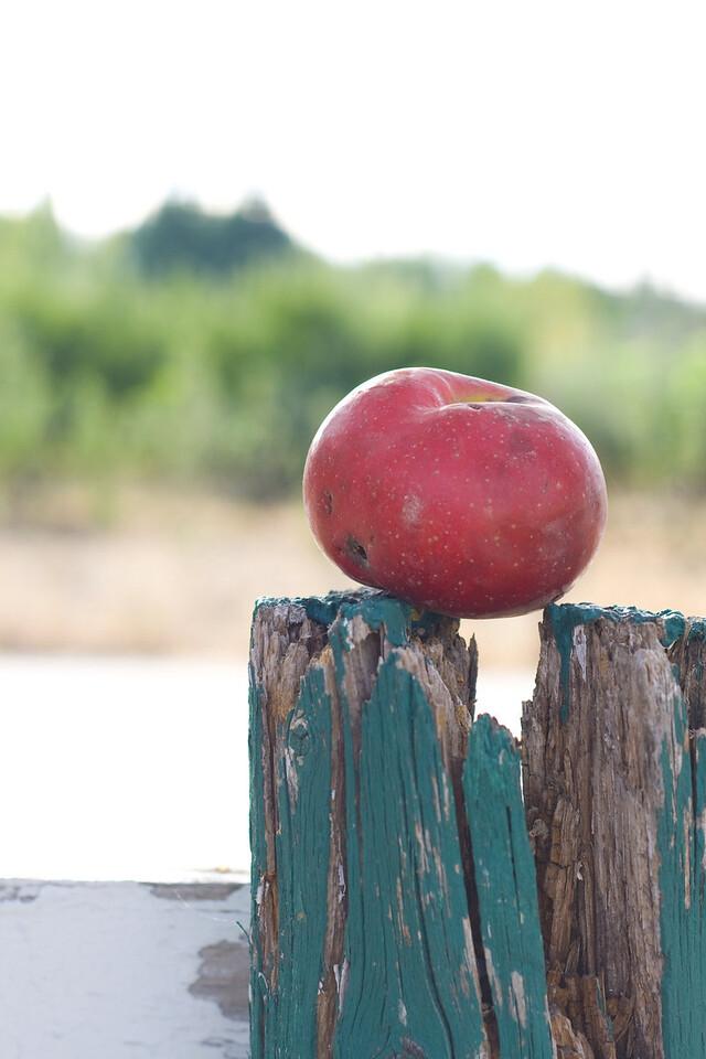 Honey Bear Ranch, Camino, CA.   Image Copyright 2010 by DJB.  All Rights Reserved.