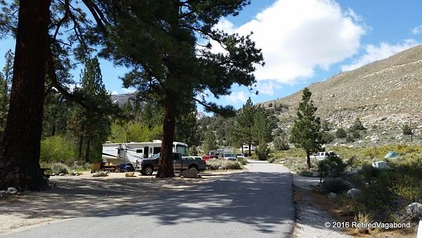Big Tree Campground - Bishop