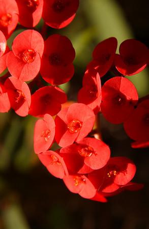 Flowering plant at San Diego Zoo