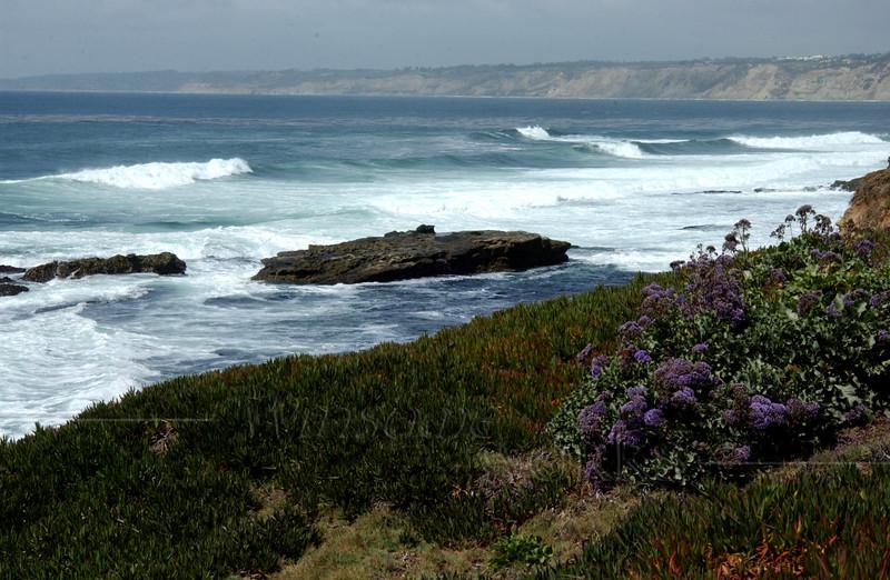 Sea Lavender grew all along the coast...
