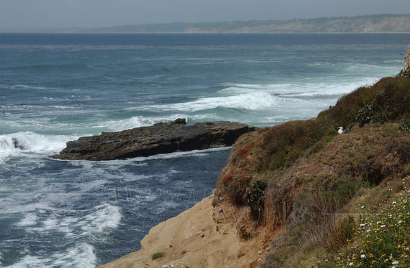 Seagull nesting on cliffs in La Jolla