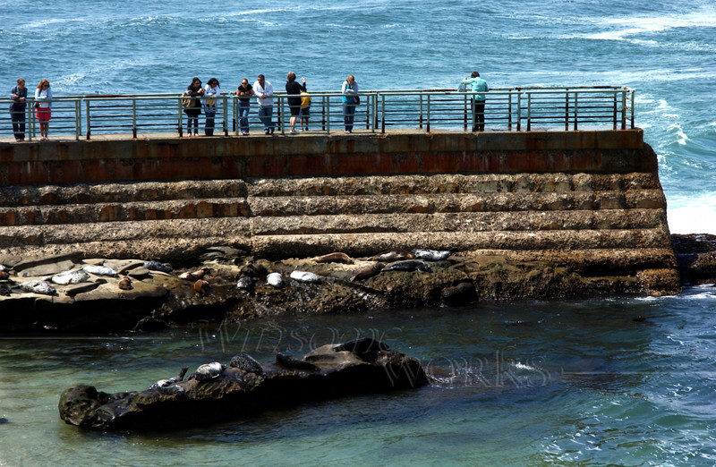 Visitors watching seals from pier
