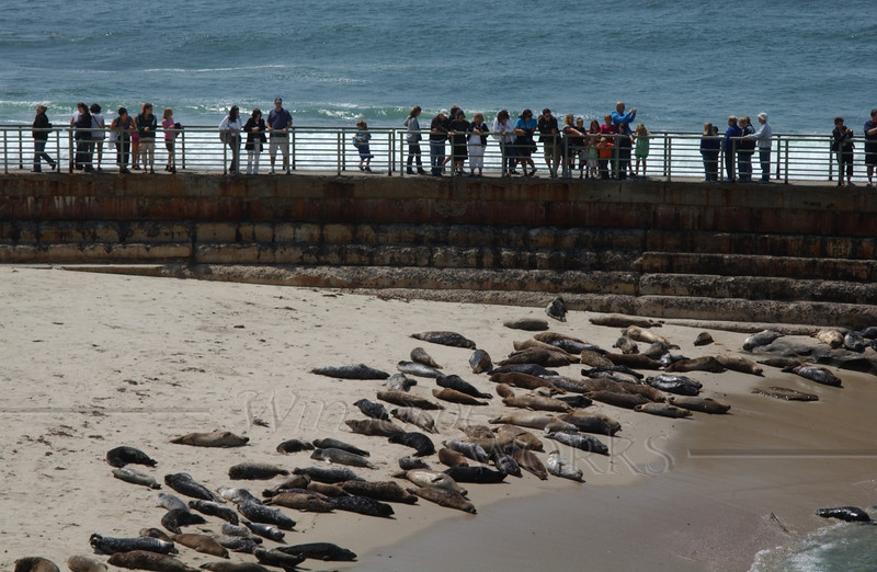 Visitors on the pier, watching seals & sea lions