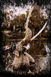 I had not been to the Tar Pits since my early childhood and so had only very limited memories of it. The main lake with this stuck Mammoth sculpture was pretty much it.