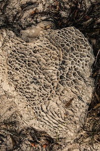 I was surprised to see some small examples of Tafoni rock formations. See my Salt Point gallery for shots of more extensive formations. Here's a link to that gallery: http://smu.gs/QblkAL