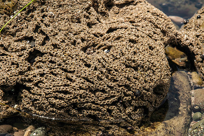 I have no idea what made these formations (a ranger suggested from my description a Sand Worm(?). It was like sand held to gether by some kind of glue and ther were all over in this one section of tidepool.