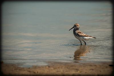 Emma Wood Beach/Seaside Wilderness 051013-0272