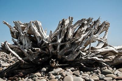 Emma Wood Beach/Seaside Wilderness 051013-0250