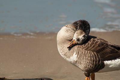Emma Wood Beach/Seaside Wilderness 051013-0238