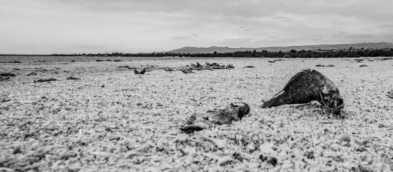 (Life)  at Salton Sea