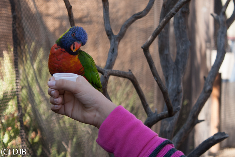 Lorikeet at Aquarium of the Pacific, Long Beach, CA.