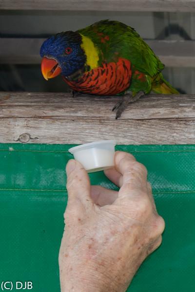 Lorikeet at Aquarium of the Pacific, Long Beach, CA.